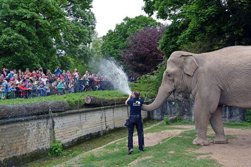 Zoo Karlsruhe Reservierung